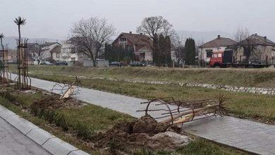 Photo of Vandali uništili tek posadjene sadnice