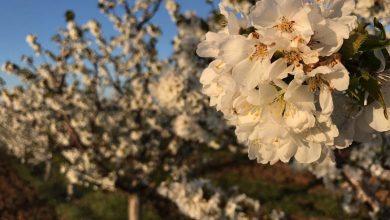 """Photo of Sa """"toplim danima"""" stižu i alergije na polen, kako ih preduhitriti"""