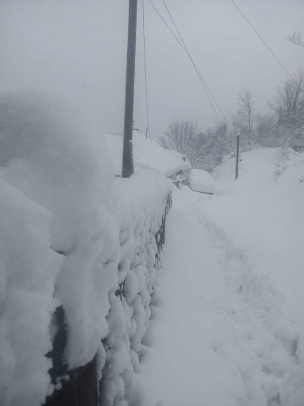 sneg berduj babusnica