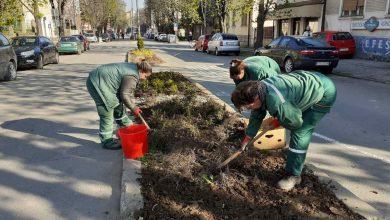 Photo of Hiljade novih sadnica cveća, ukrasnih živica i žbunova krasiće Pirot i ovog leta