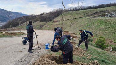 Photo of Posadi svoj hlad – podela besplatnih sadnica građanima Pirota