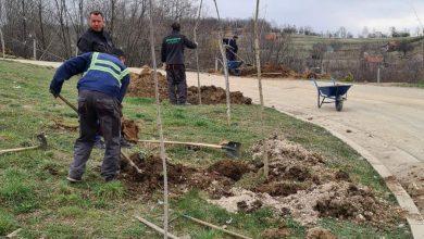Photo of Na Regionalnoj sanitarnoj deponiji zasadjeno 75 sadnica belog jasena