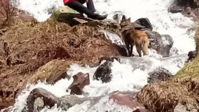 Photo of Epski prizori sa Stare planine, vodopadi na sve strane, šafrani na Vrtibogu,  poludivlji konji, scene za pamćenje