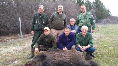 Photo of Lovišta zaražena Afričkom kugom svinja, kod domaćih svinja nije potvrđeno prisustvo virusa